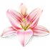 elfashion.at-flower-70x70
